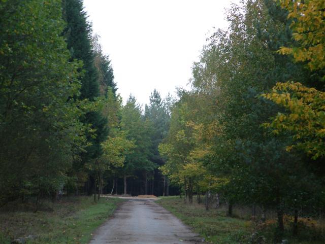 Bramshill Plantation