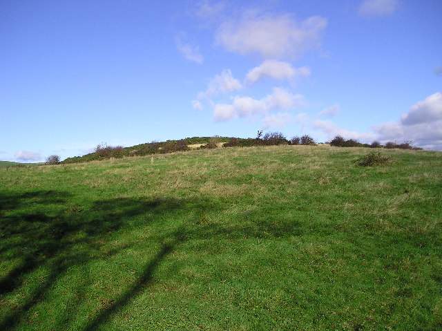 Fellie Hill