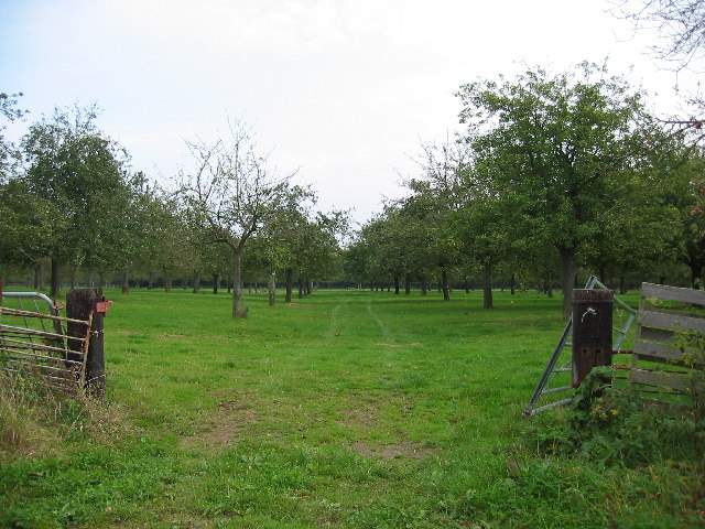 Fruit Orchard