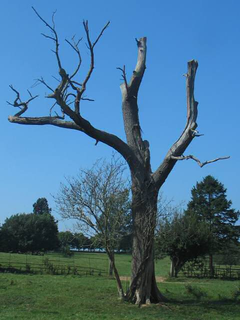 Stark Tree