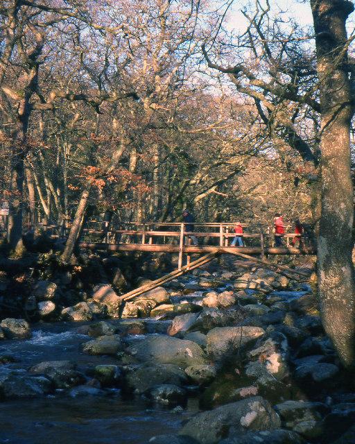 Footbridge, Dewerstone Wood
