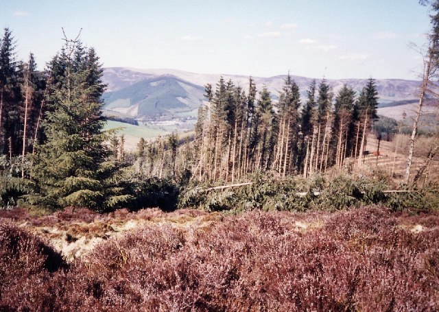 The heather and forest north of Minchmoor