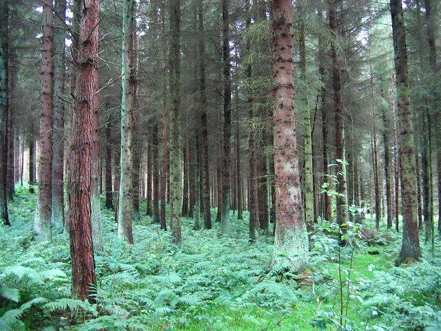 Beecraigs Woods.