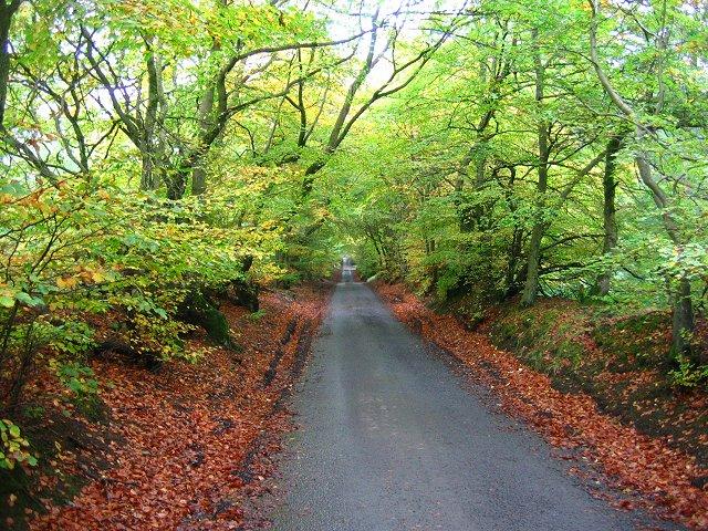 Minor road, Beecraigs.