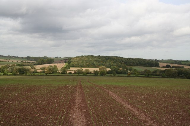 Hare Hill