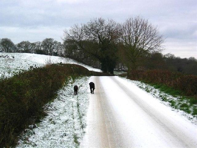 Snowy Road near Catton Hall
