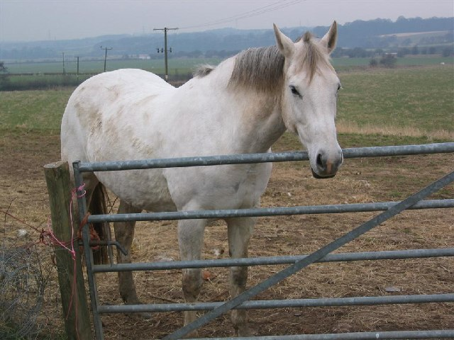 Pony near Catton Hall