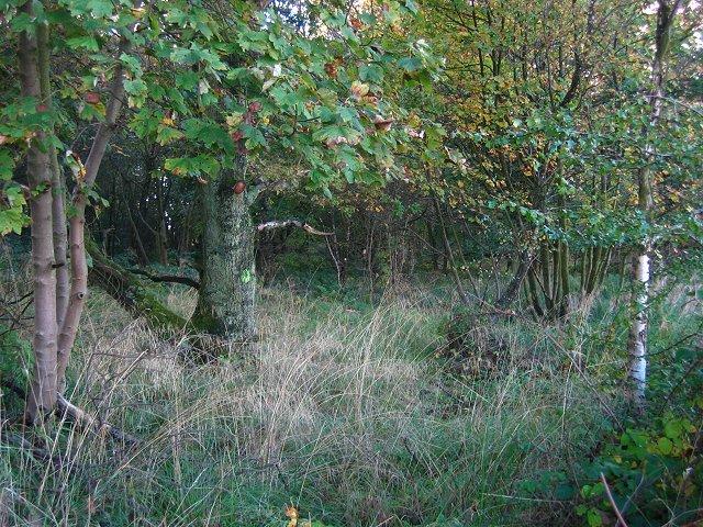 Longmuir Plantation.
