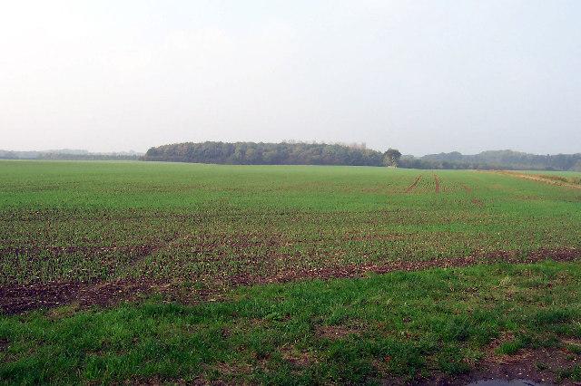 Near Brocklesby