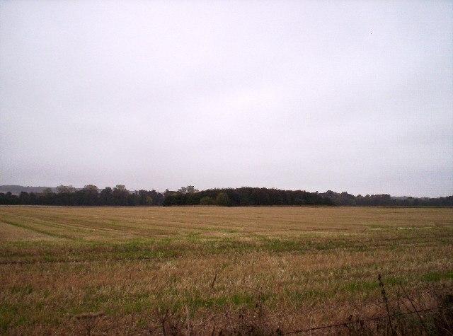 Field and Copse near Westside Farm
