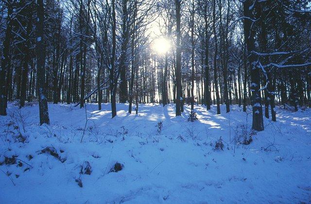 Whitcliffe Wood.