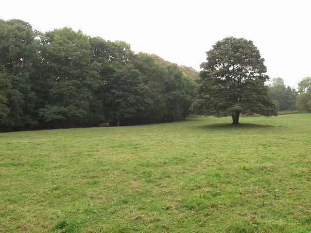 Hafod Wood within Erddig Park near Wrecsam