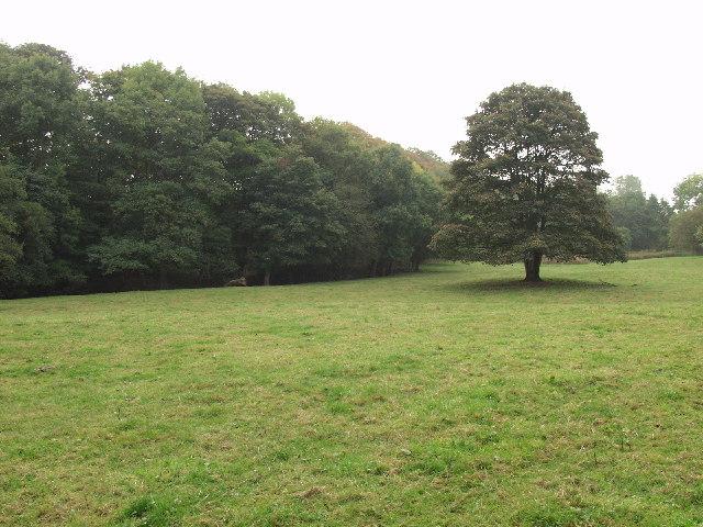 Hafod Wood within Erddig Park near Wrecsam