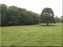 SJ3247 : Hafod Wood within Erddig Park near Wrecsam by John Haynes