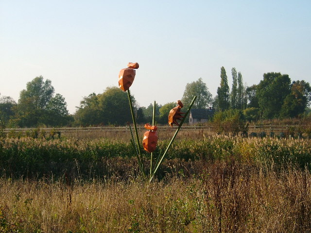 Orange Ladybirds, Great Leighs