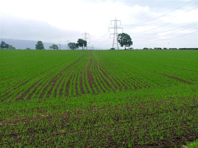 Arable Fields, Haggitt Hill Lane