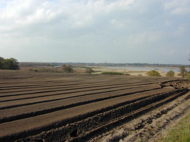 Farmland near Iken
