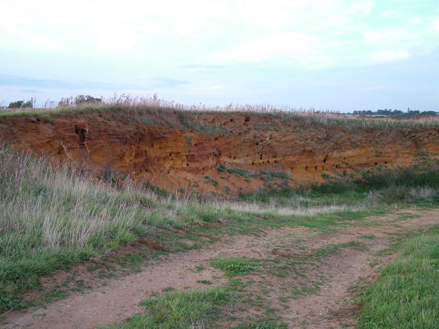 "Inland ""Cliff"" with Sand Martin burrows, near Buckanay Farm, Alderton"