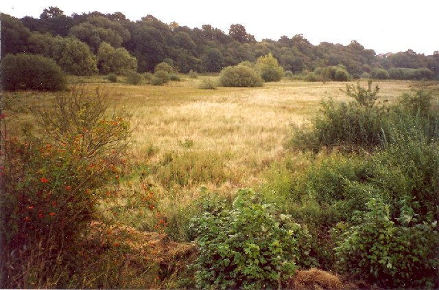 Old River Bed, Coton Hill, Shrewsbury