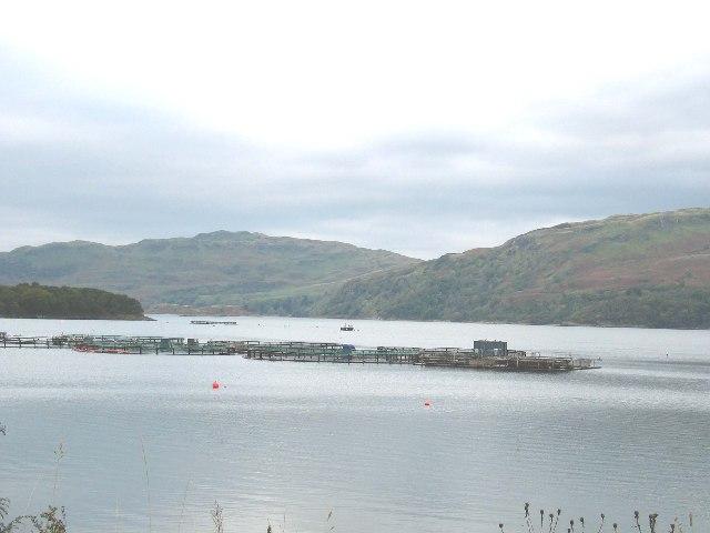 Fish farm Kames Bay, Loch Melfort, Argyll.