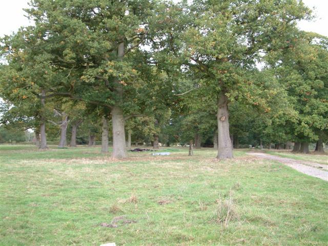 Swallowfield Park