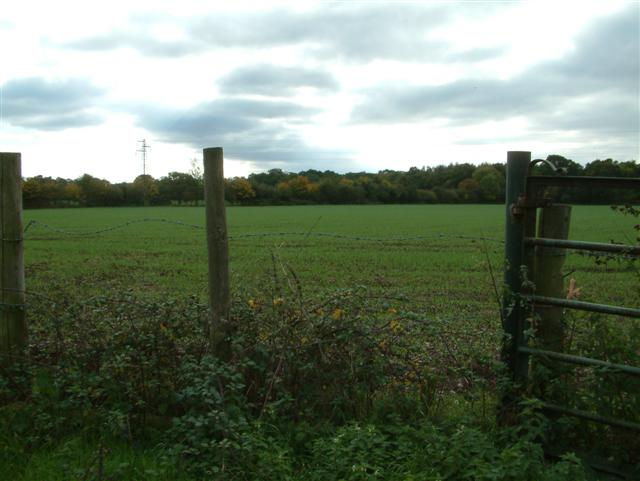 Across the fields to Great Wood