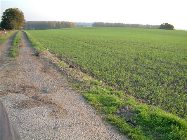 The fields of  Shiplake