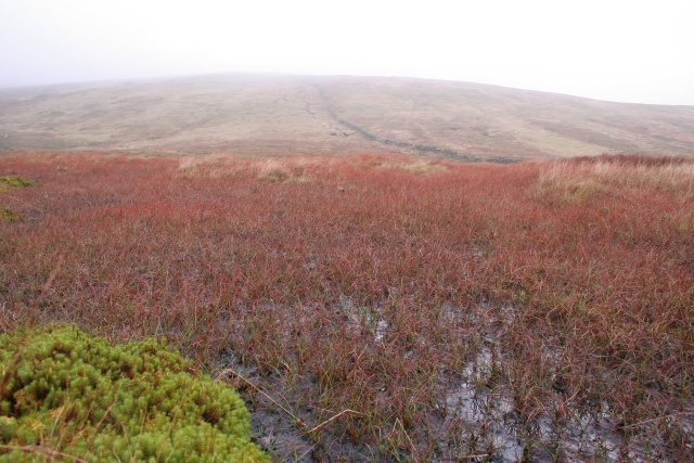 Coloured grass below Knoutberry Hill