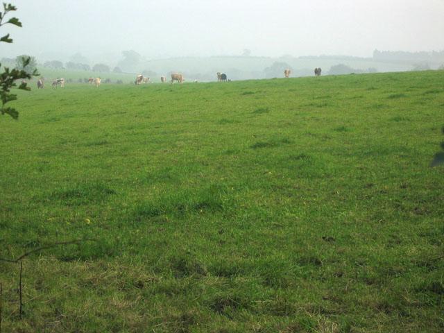 Farmland near Oakham, Rutland