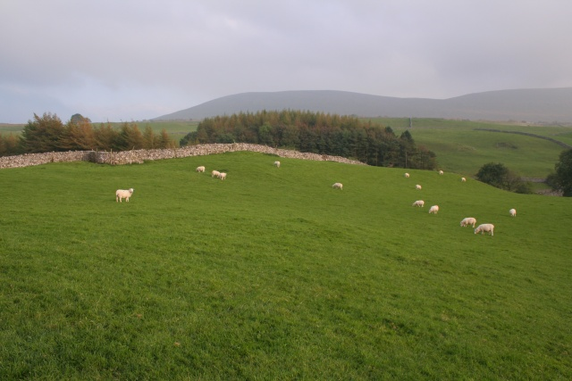 Sheep Grazing near Philpin