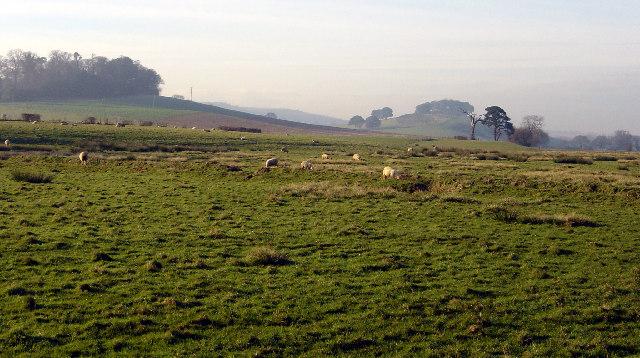 Low lying fields near Powderham