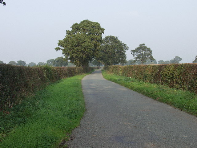 Country lane with big trees