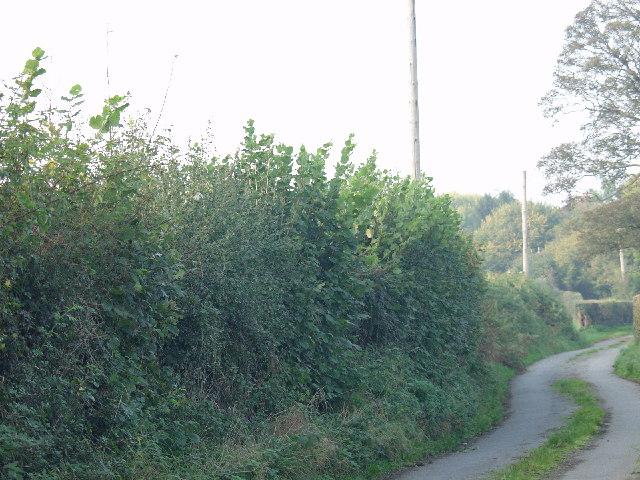 Rural lane at Musley