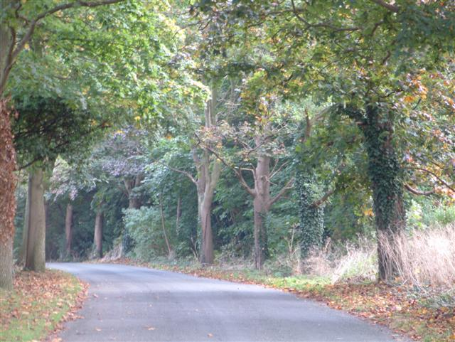 Woodlands Road, Lower Shiplake