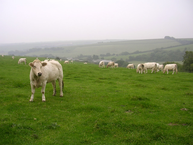 View from Shatcombe Lane towards Eggardon Hill Farm