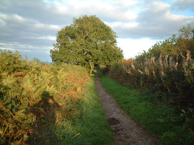 Bridleway on Bleadon Hill