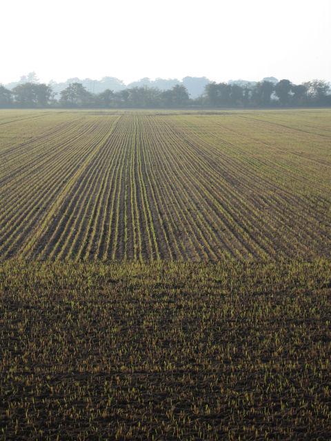 Freshly planted crops near Tunstall