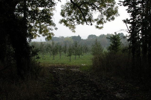 Apple Orchard near Staplow