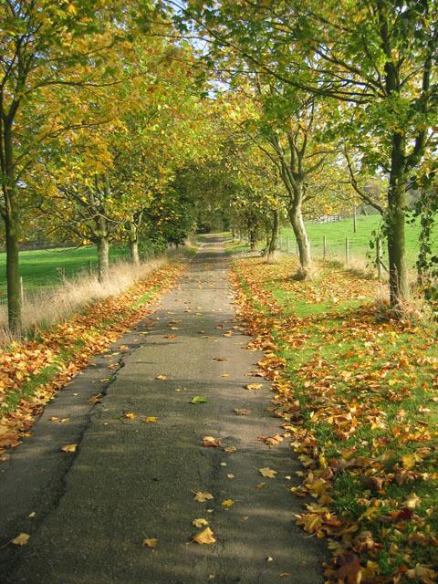 Farm road, Brock Hill Farm, near Hose
