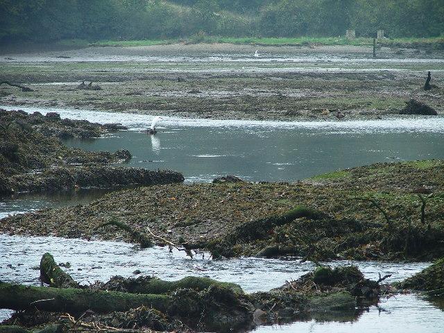 Mudflats, River Yealm