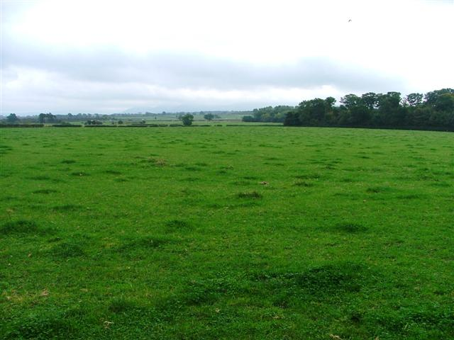 Field Adjacent to New Dales Plantation