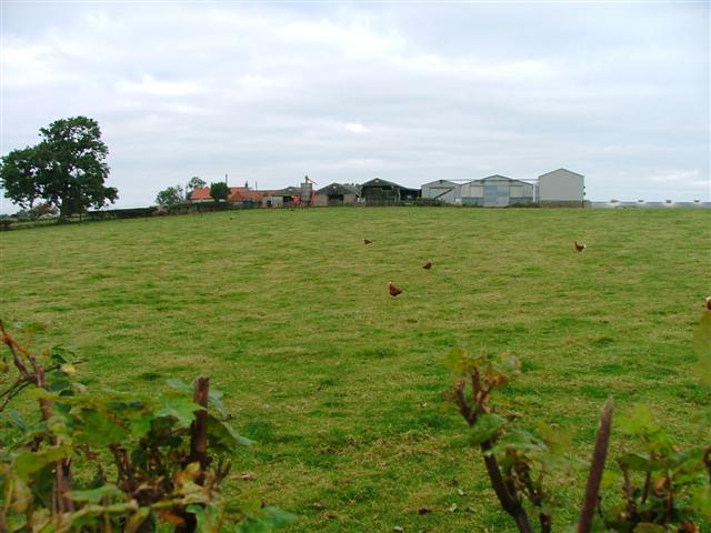 Doddle Hill Farm