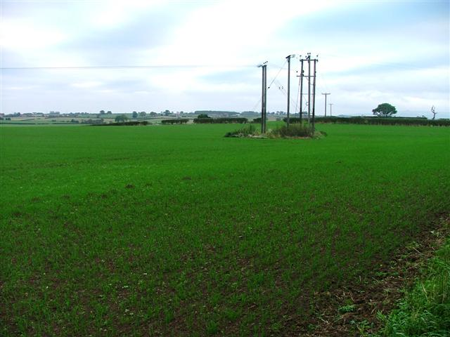 Array of Electricity Poles, Blue Barn Lane
