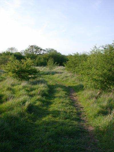 Coney Meadow
