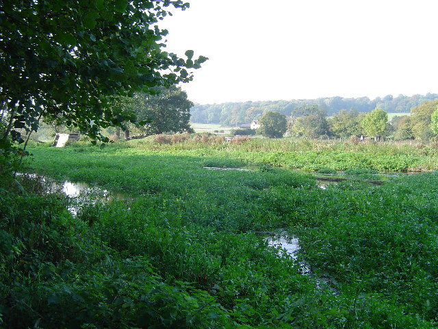 River Chess watercress beds
