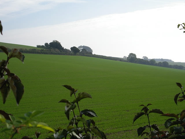 Fields south of Easton