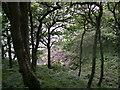SN0007 : Walk along from Lawrenny by Andy Lesnianski
