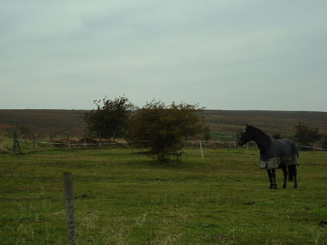 Horse at Owler Bar