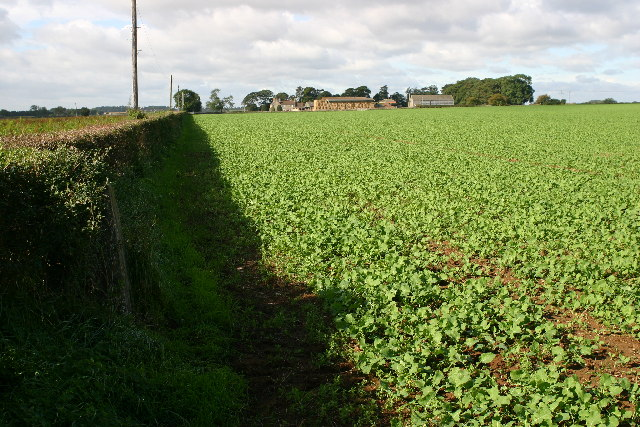 Looking towards Coleby Lodge Farm