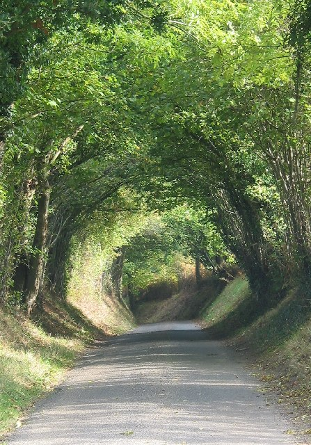 Tree Tunnel on Balcombe Lane